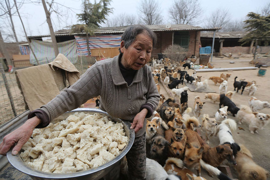 Senior woman holding large pan of food for a huge group of hungry dogs