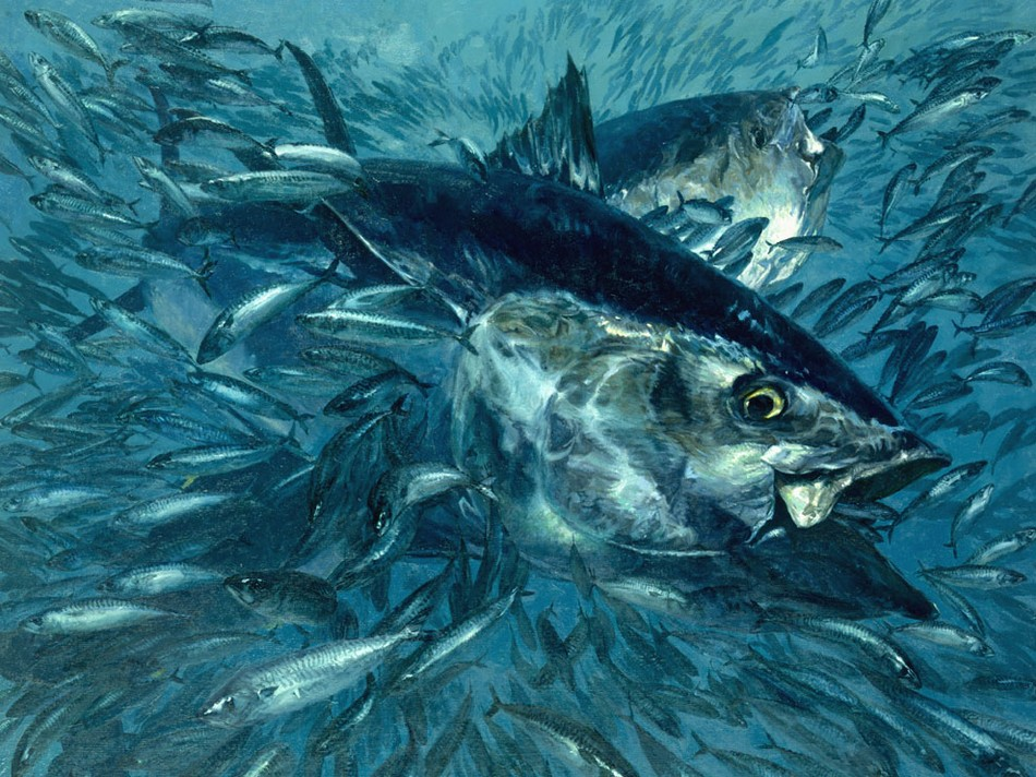Painting of two bluefin tuna surrounded by swirls of hundreds of little fish