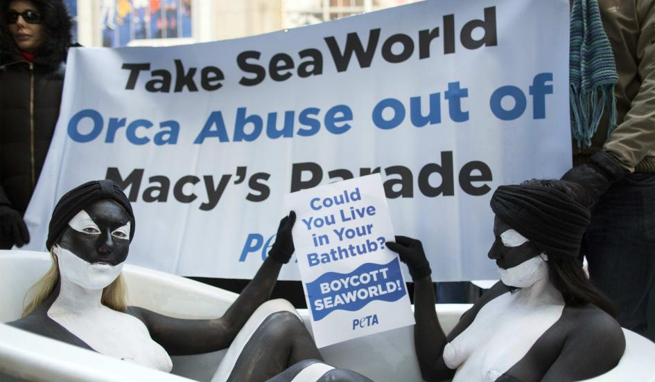 "PETA protest against Seaworld float in Macy's Parade. Two nude women with body paint like orcas sit in a bathtub holding a sign, ""Could you live in your bathtub? Boycott Seaworld!"""