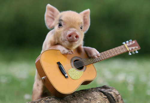 Piglet leaning on tiny guitar