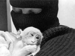 ALF member in ski mask cradling small monkey
