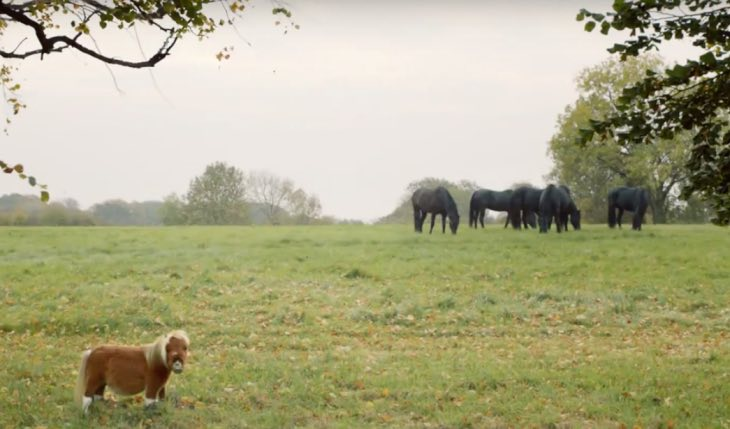 Dejected pony ignored by larger herd of horses