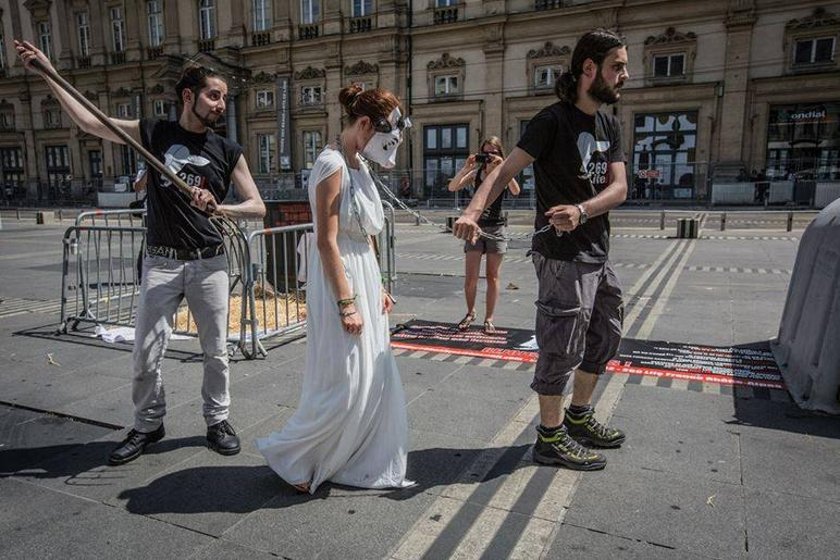 Woman in cow mask and white dress led through streets by men with a lead