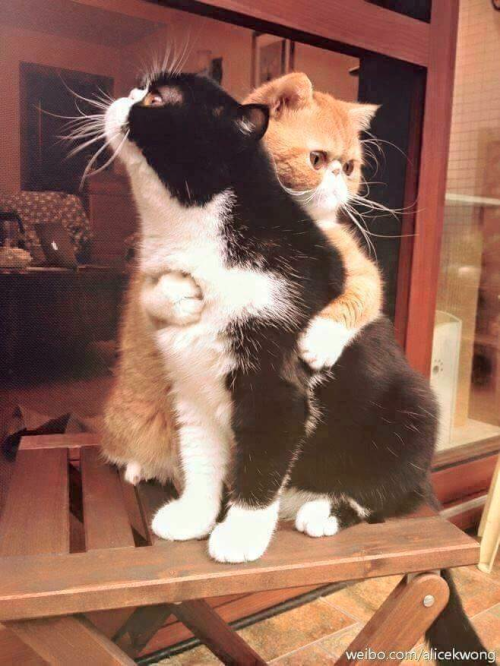 image description: A photo of two cats on a small table. One cat is holding and it looks like they're comforting the other cat